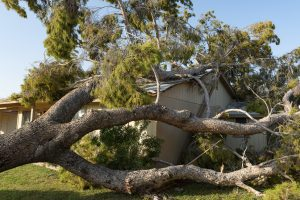wib16-270420_tree_damage_insurance_1128x760px_FNL_post1
