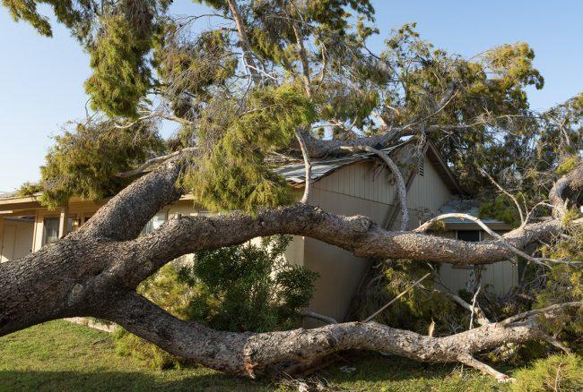 wib16-270420_tree_damage_insurance_1128x760px_FNL_post1